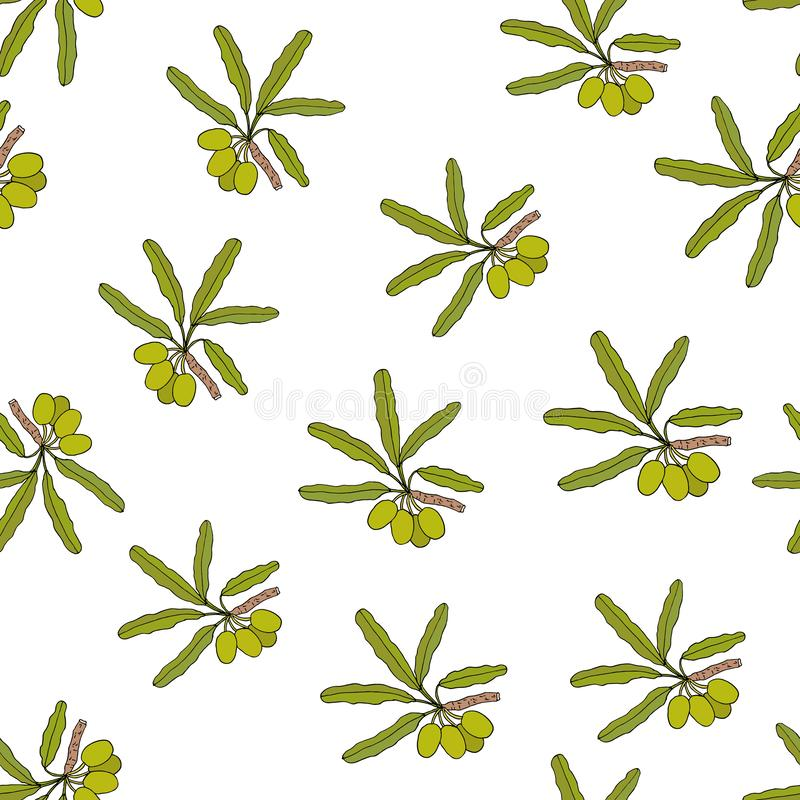 Shea tree branches seamless pattern stock illustration