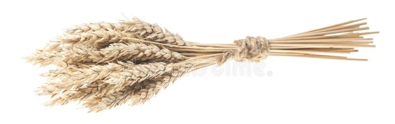 sheaf των ξηρών αυτιών του καλαμποκιού που απομονώνονται στο λευκό στοκ φωτογραφία με δικαίωμα ελεύθερης χρήσης