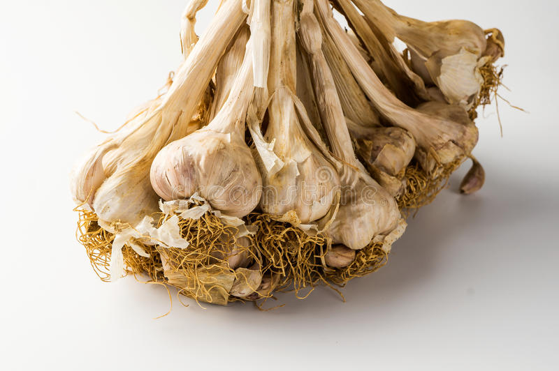 A sheaf of garlic stock images