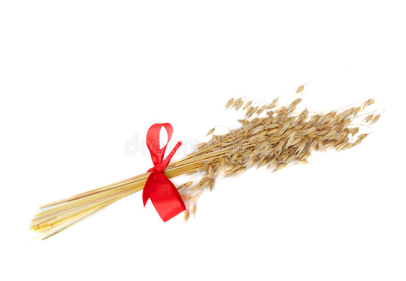 Sheaf of spikes. With the red ribbon royalty free stock images