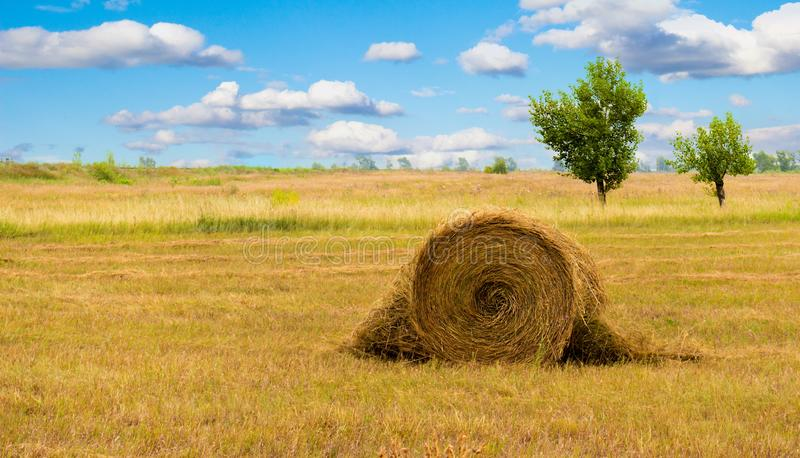 Sheaf in a summer field. Haystack or sheaf on the meadow. Summer rural landscape with row of straw bales on the field. Agricultural landscape with hay rolls royalty free stock photography