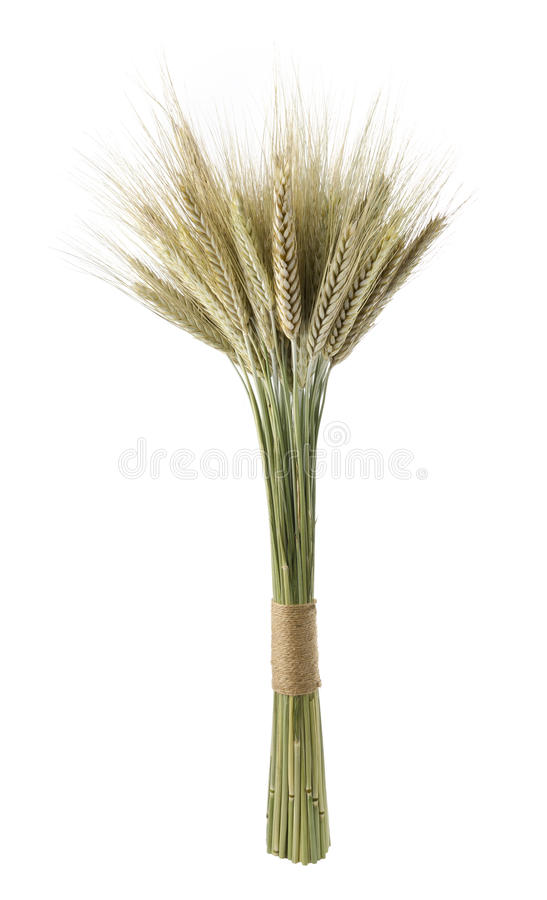 Sheaf of wheat. Isolated on white. Front view stock images