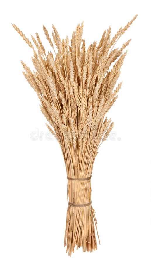 Sheaf of wheat. On white royalty free stock photography