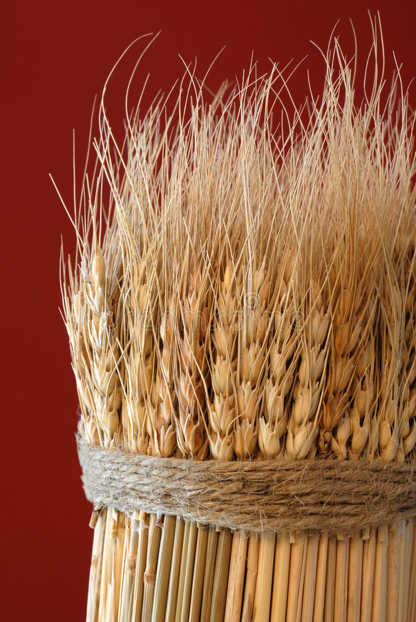 Sheaf of Wheat. Against a Red Background royalty free stock photography
