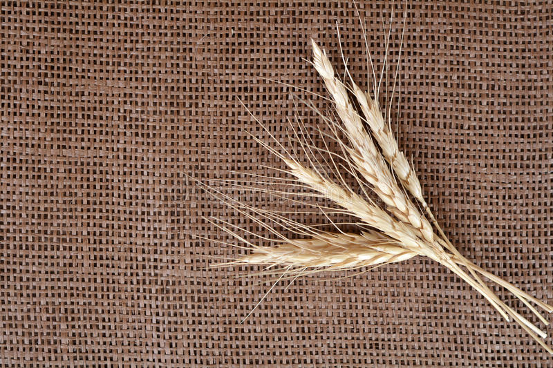 Sheaf of wheat. On burlap background stock image