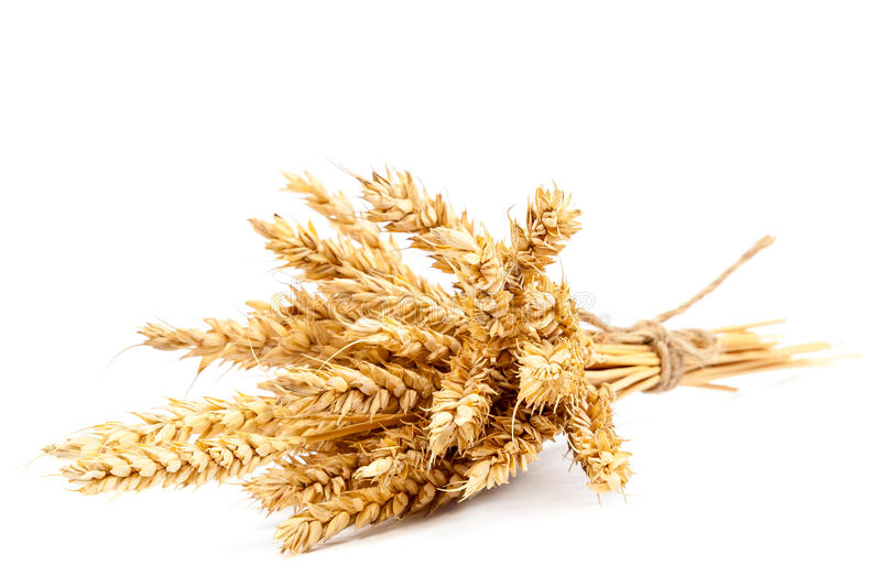 Sheaf of wheat ears on white background. Sheaf of wheat ears isolated on white background stock photos