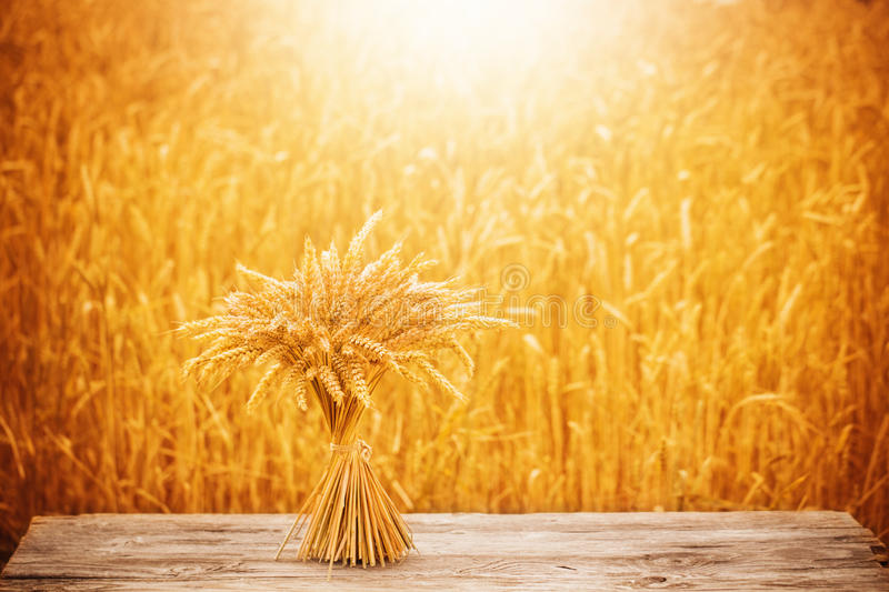 Sheaf on wooden table. On background field stock image