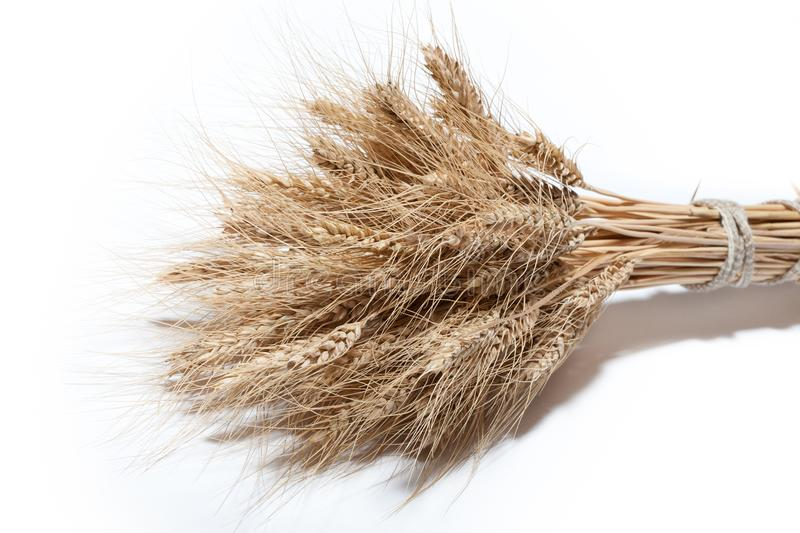 Sheaf of yellow wheat spikelets on the white background royalty free stock images