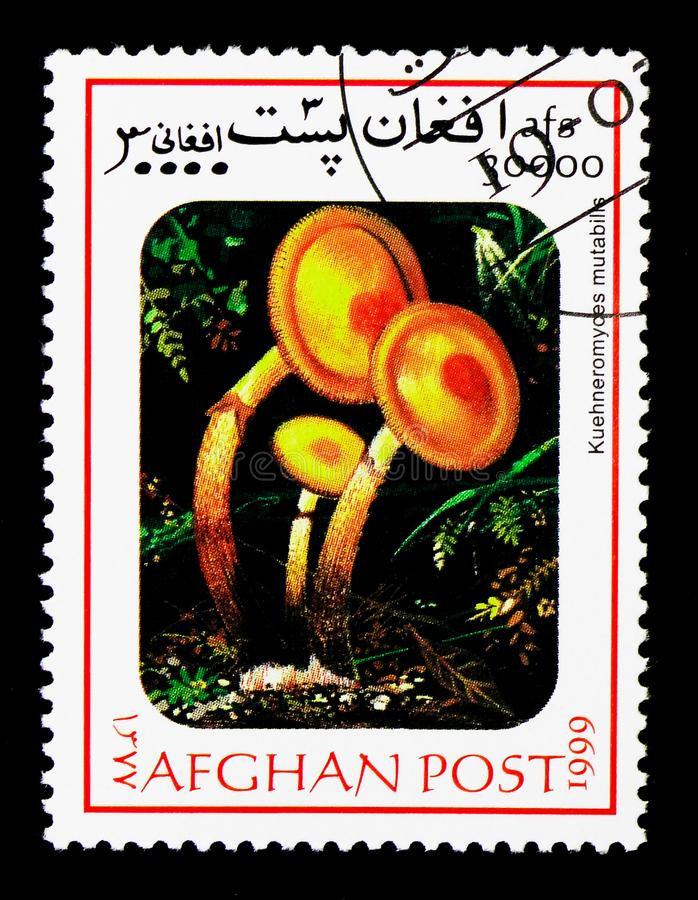 Sheathed woodtuft (Kuehneromyces mutabilis), Mushrooms serie, ci. MOSCOW, RUSSIA - DECEMBER 21, 2017: A stamp printed in Afghanistan shows Sheathed woodtuft ( stock image