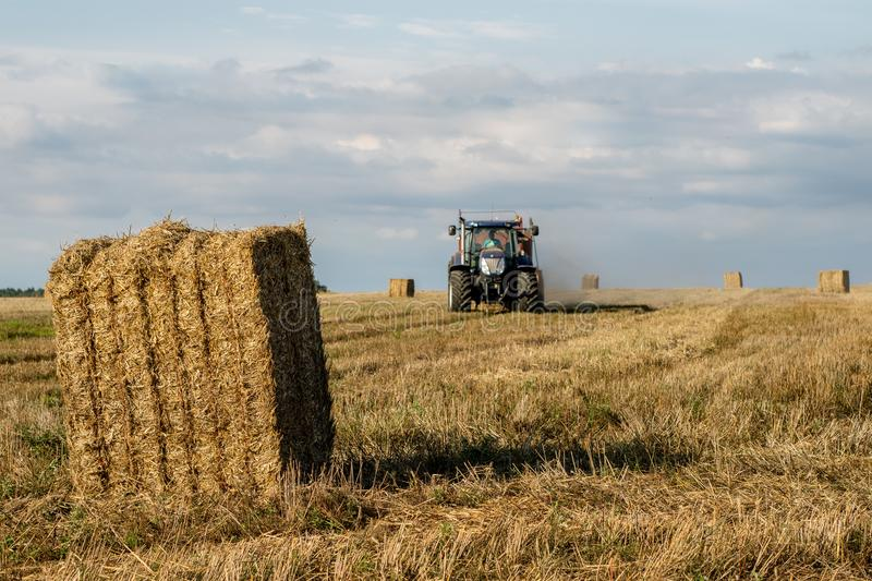 Sheaves of straw arranged in the field. Work done during harvest. Season of the summer stock photo