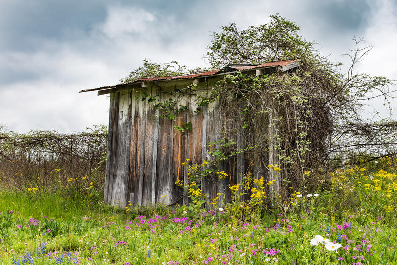 Shed overgrown with vegetation in field of wildflowers. Capture on rainy cloudy day royalty free stock image