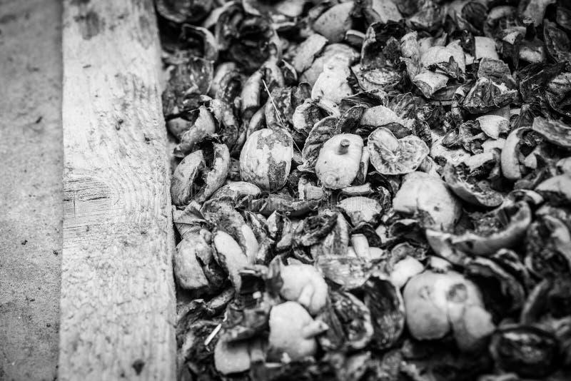 Sheels del dado in bianco e nero fotografia stock
