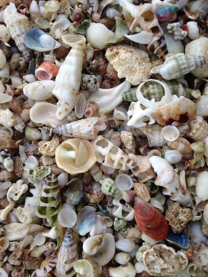 Sheels shells of all colours and sizes stock image
