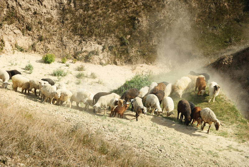 Download Sheep stock photo. Image of middle, mutton, grass, lambskin - 16765406