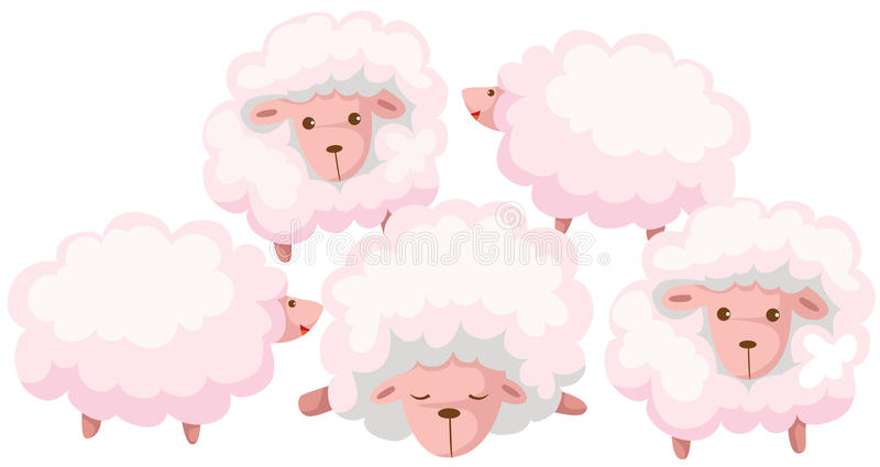 Sheep. Illustration of isolated cartoon flock sheep on white vector illustration