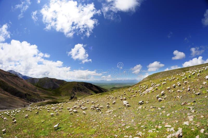 Download Sheep stock image. Image of grass, environment, farming - 26144619