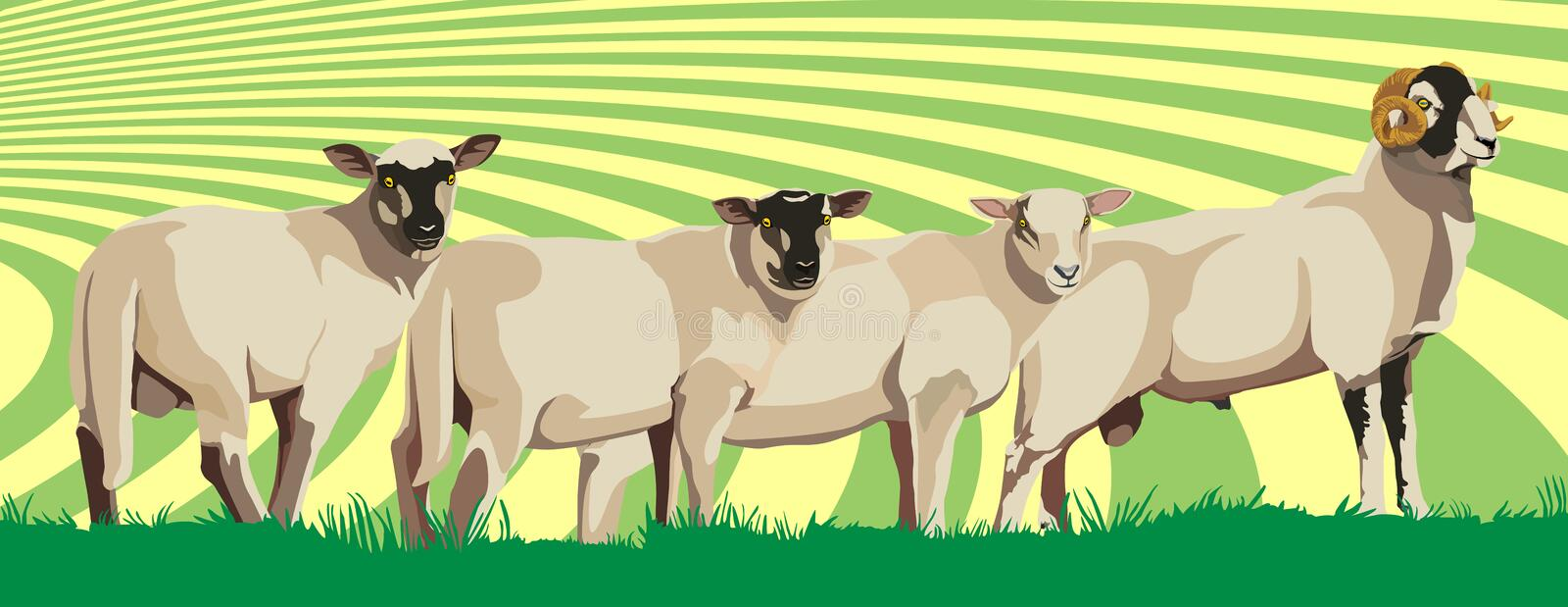 Download Sheep stock vector. Image of nature, food, cheese, postcard - 29330770