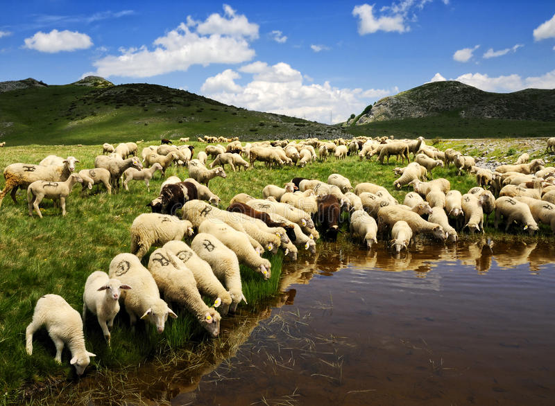 Download Sheep stock image. Image of cute, clouds, friendly, agriculture - 9841553