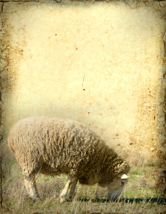 Sheep Background vector illustration