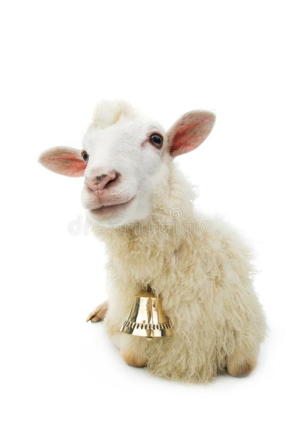Sheep with bell isolated stock photos