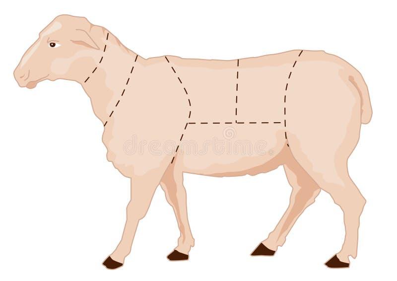 Sheep chart. Butchery sheep chart, lamb meat cuts vector illustration