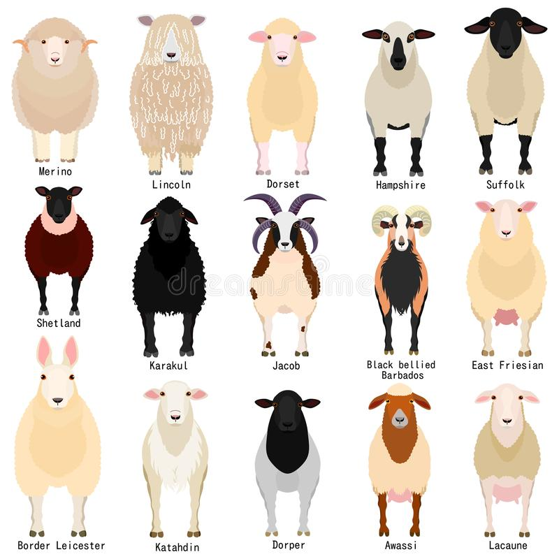 Free Sheep Chart With Breeds Name Stock Image - 145533821