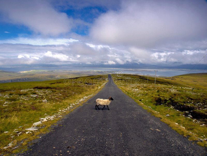 Download Sheep Crossing stock photo. Image of water, clouds, roadway - 6119860
