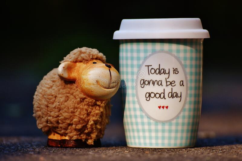 Sheep and cup of coffee stock photos
