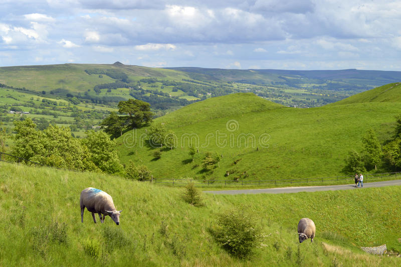 Sheep in Edale Derbyshire royalty free stock photography