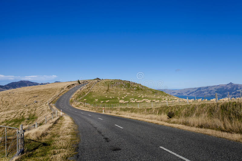 Sheep farm along the roadside to Akaroa town, New royalty free stock photos