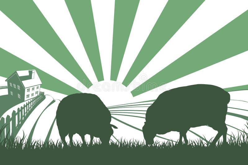 Sheep Farm Sunrise Landscape vector illustration