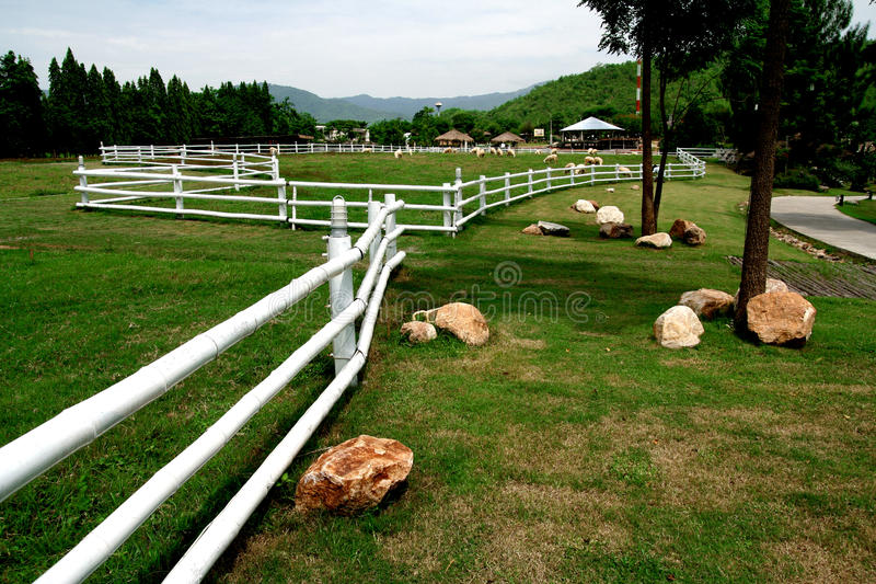 Sheep Farms In The Mountains Royalty Free Stock Photography