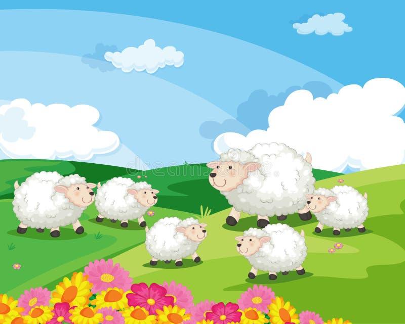 Sheep in field stock illustration