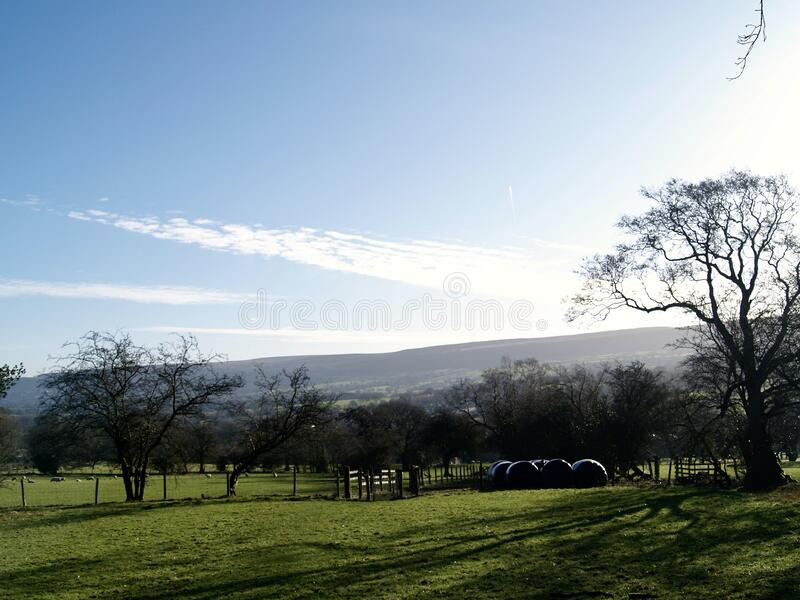 Sheep field in the Yorkshire dales royalty free stock photography