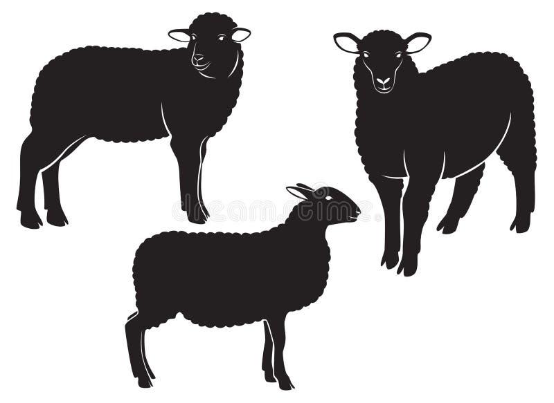 Sheep. The figure shows a sheep