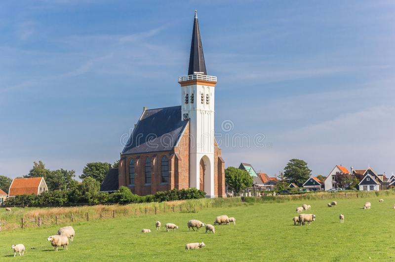 Sheep in front of the church of Den Hoorn. On Texel island in the Netherlands stock photo