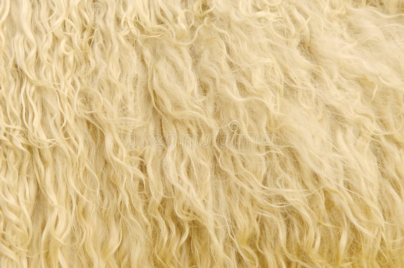 Download Sheep Fur Background stock photo. Image of domesticated - 7891592