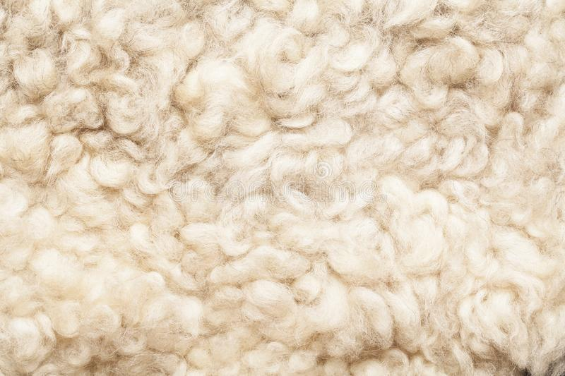 Color Of Natural Wool