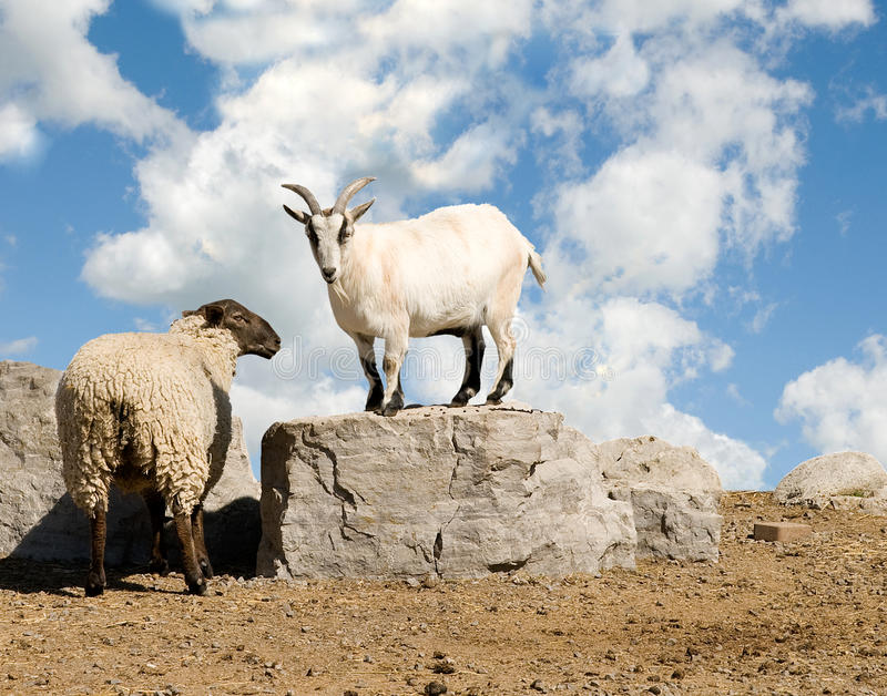 Download Sheep And Goat Stock Photography - Image: 25687812