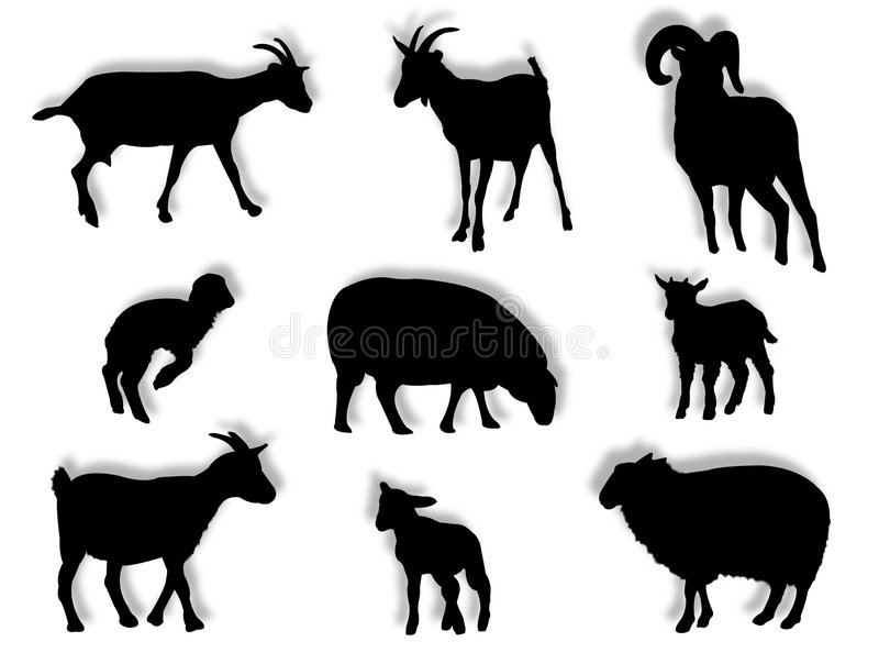 Sheep and goats in silhouette vector illustration