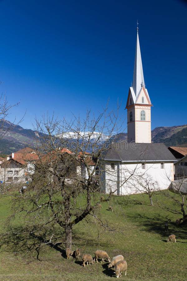 Download Sheep Graze  In Front Of Large White Church Stock Photo - Image: 19326148