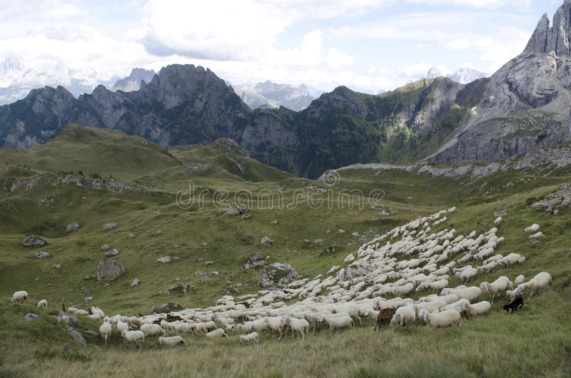 Download Sheep Grazing In Mountain Royalty Free Stock Photography - Image: 26482507