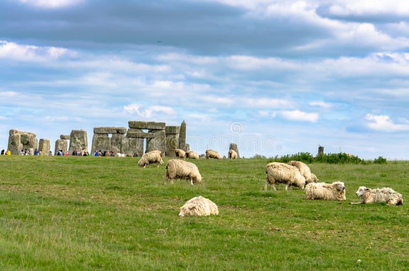 Sheep grazing at Stonehenge royalty free stock photos