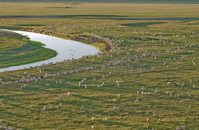 Sheep herd in dusk. The massive sheep herd in the dusk of summer prairies, Inner Mongolia, China stock photo
