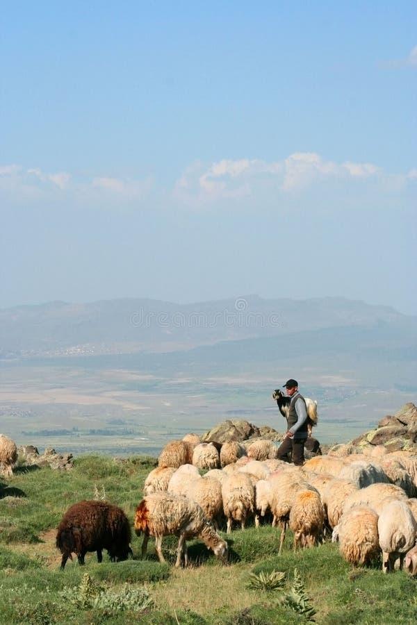 Sheep And Herdsman Stock Image