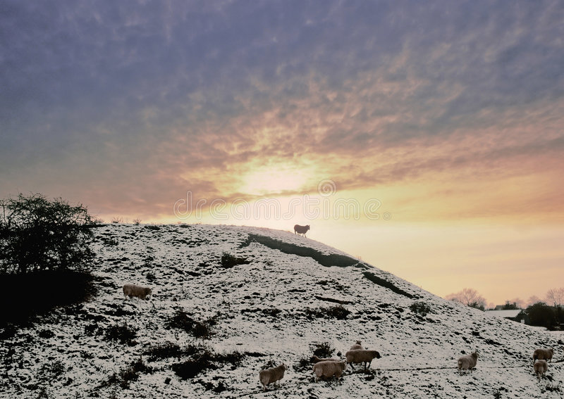 Sheep on hill royalty free stock photos