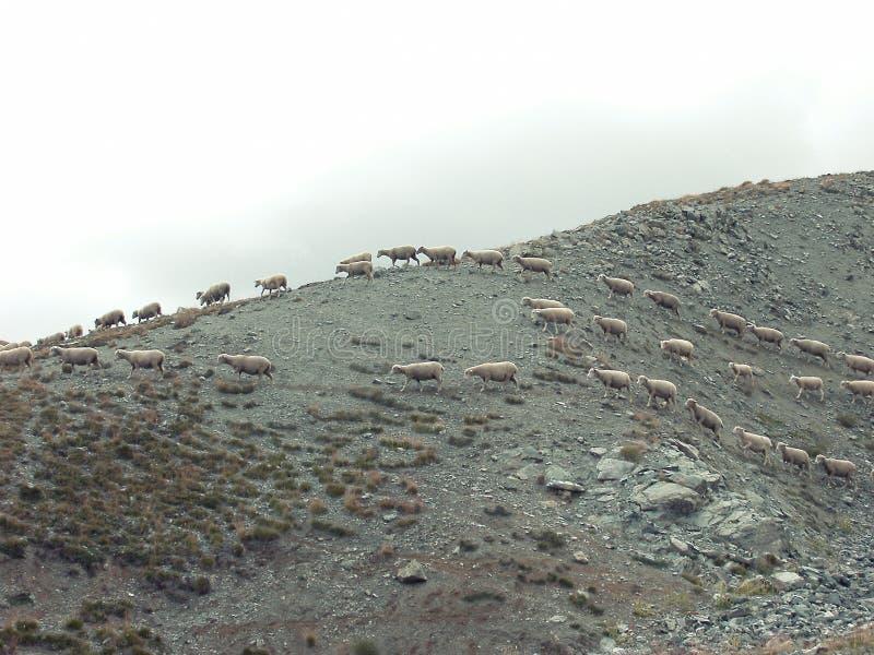 Sheep On Hillside Free Public Domain Cc0 Image