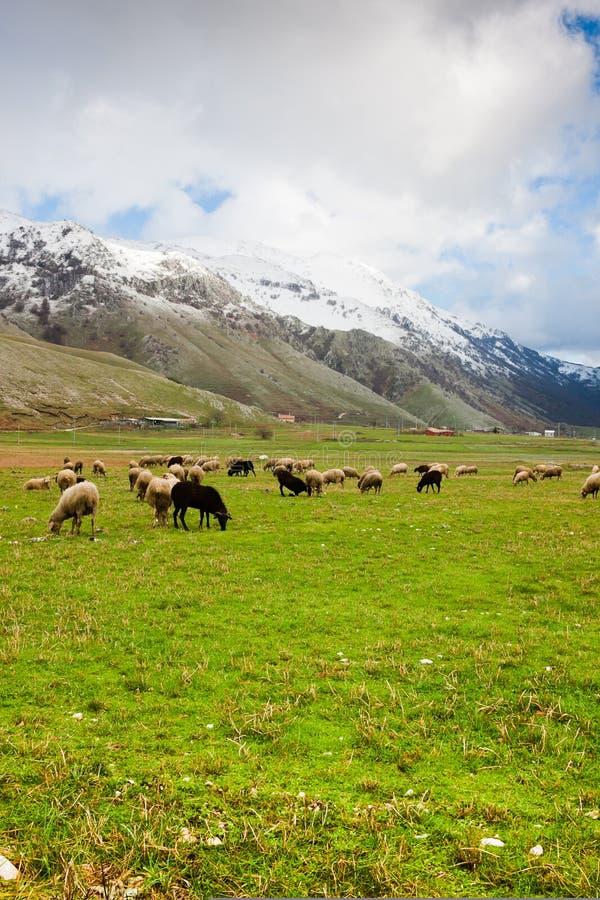 Sheep At Lago Del Matese Stock Photography