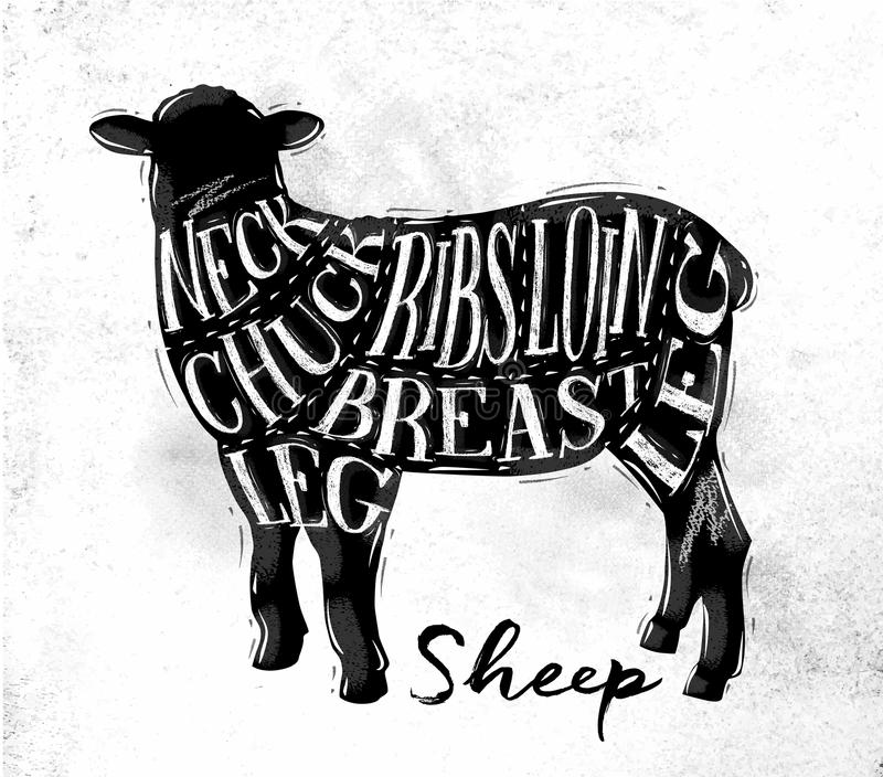 Sheep lamb cutting scheme. Poster sheep lamb cutting scheme lettering neck, chuck, ribs, breast, loin, leg in vintage style drawing on dirty paper background royalty free illustration