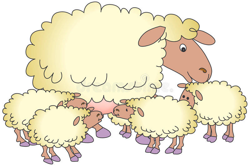 Sheep and lambs. Lambs Suckling Milk From Mother, isolated on a white background royalty free illustration